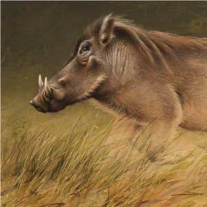 African Warthog by Andrew Denman