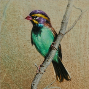 Black-chinned Sparrow in Mint, Violet & Gold by Andrew Denman