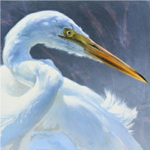 Great White Egret by Andrew Denman