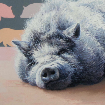 Potbelly Pig by Andrew Denman
