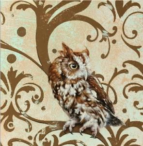 Screech Owl by Andrew Denman