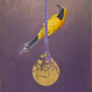 Oriole by Andrew Denman