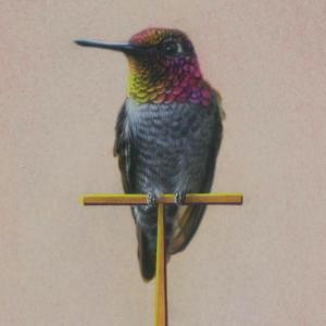 Annas Hummingbird by Andrew Denman