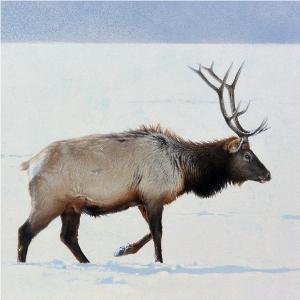Elk by Andrew Denman