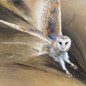 Barn Owl in Flight by Andrew Denman