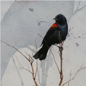 Red-Winged Blackbirds by Andrew Denman