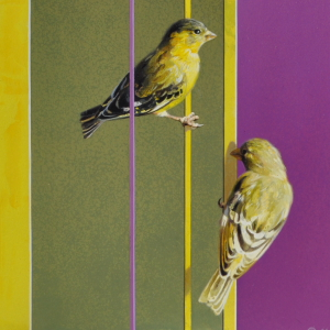 Lesser Goldfinches by Andrew Denman