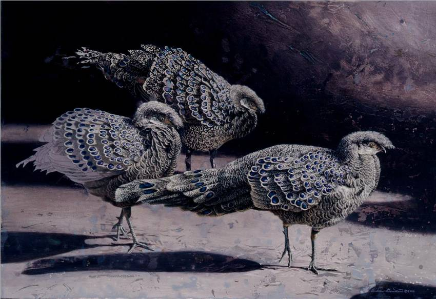 Silver-Grey Peacock Pheasants by Andrew Denman
