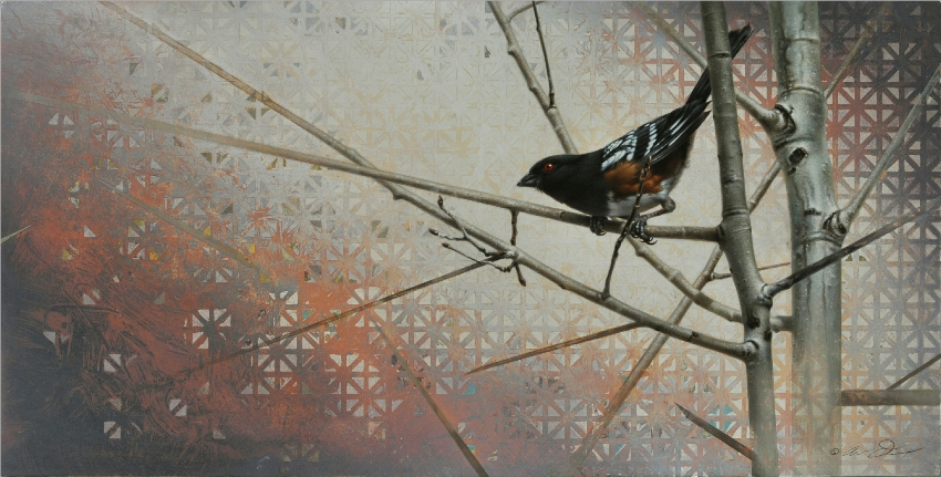 Spotted Towhee by Andrew Denman
