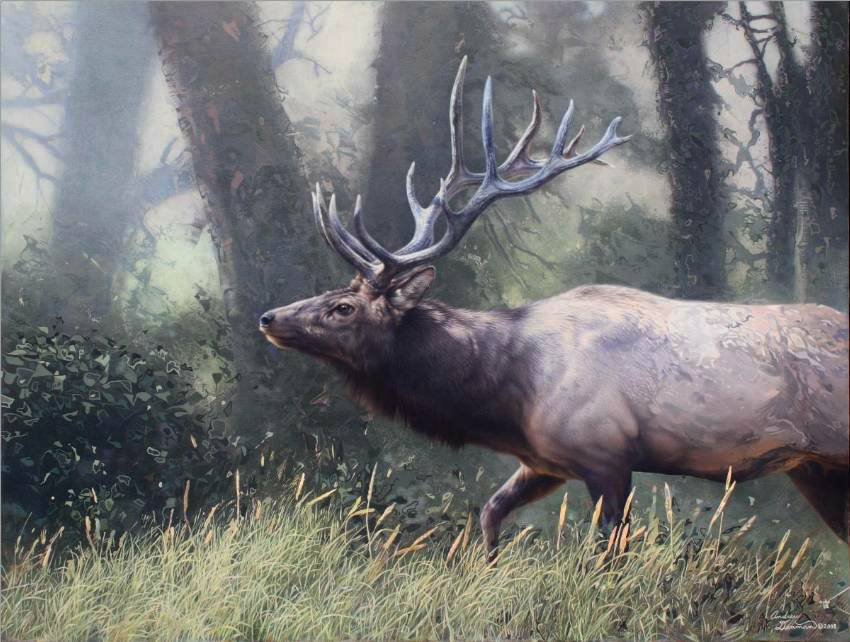 Bull Elk by Andrew Denman