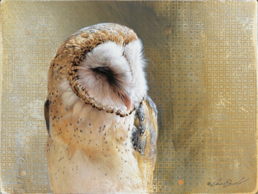 Barn Owl by Andrew Denman