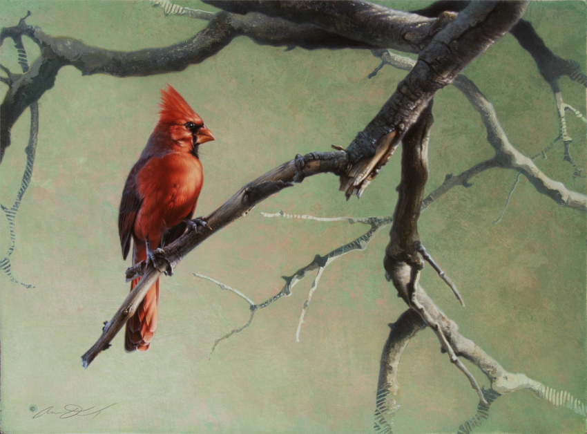 Cardinal by Andrew Denman