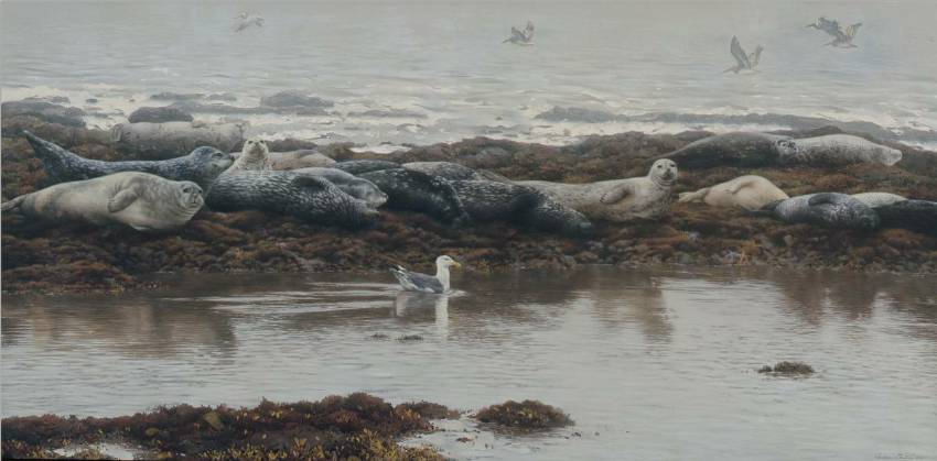 Harbor Seals with Gull by Andrew Denman