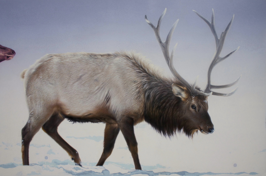 Detail of Elk in Winter by Andrew Denman