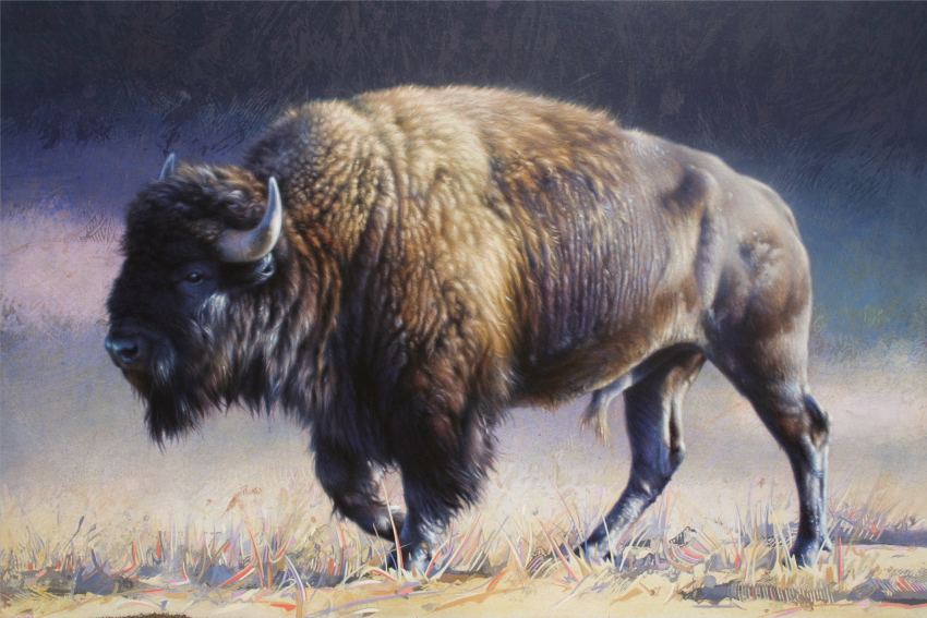 Detail of Bison by Andrew Denman