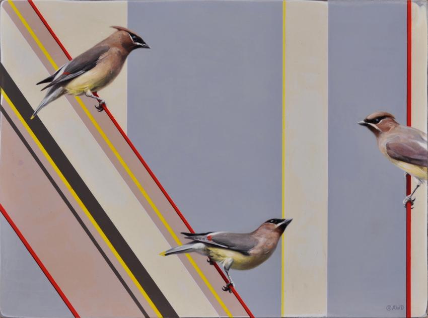 Cedar Waxwings by Andrew Denman