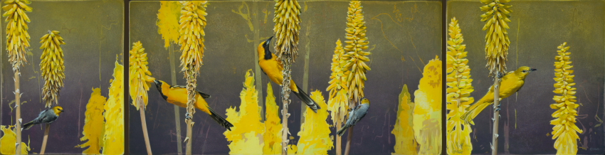 Hooded Orioles & Verdin on Aloe Vera by Andrew Denman