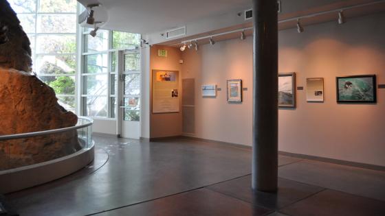 Lindsay Wildlife Museum Opening 8