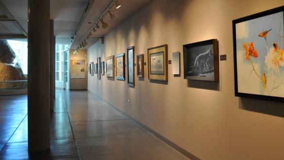 Lindsay Wildlife Museum Opening 9