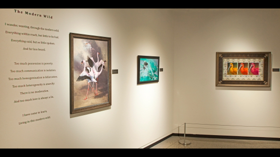 Arizona-Sonora Desert Museum Opening 4